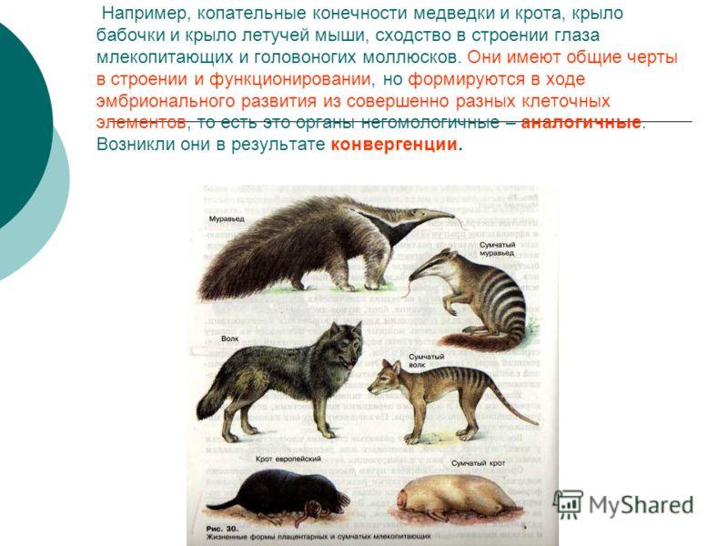 Например, копательные конечности медведки и крота, крыло бабочки и крыло летучей мыши, сходство в строении глаза млекопитающих и головоногих моллюсков. Они имеют общие черты в строении и функционировании, но формируются в ходе эмбрионального развития