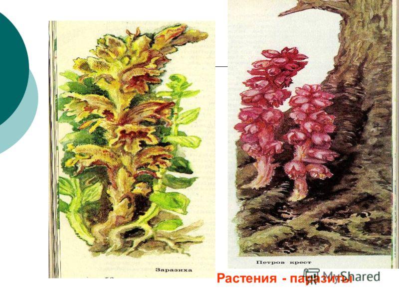 Растения - паразиты