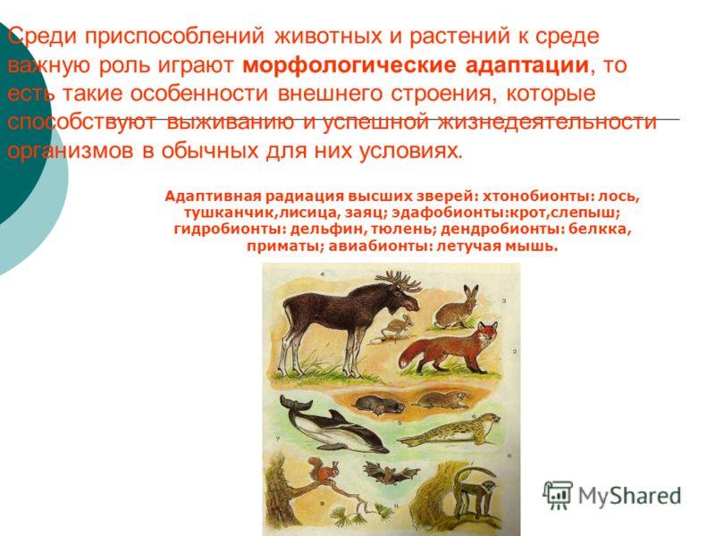 Среди приспособлений животных и растений к среде важную роль играют морфологические адаптации, то есть такие особенности внешнего строения, которые способствуют выживанию и успешной жизнедеятельности организмов в обычных для них условиях. Адаптивная