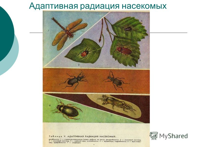 Адаптивная радиация насекомых
