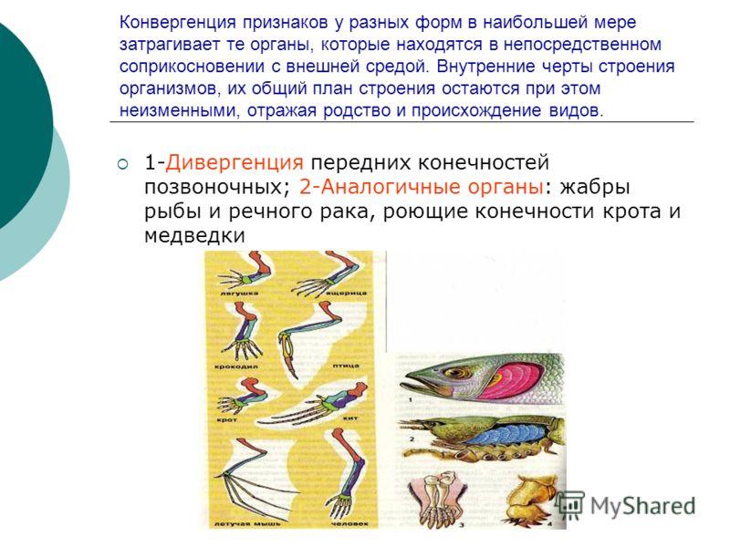 Конвергенция признаков у разных форм в наибольшей мере затрагивает те органы, которые находятся в непосредственном соприкосновении с внешней средой. Внутренние черты строения организмов, их общий план строения остаются при этом неизменными, отражая р