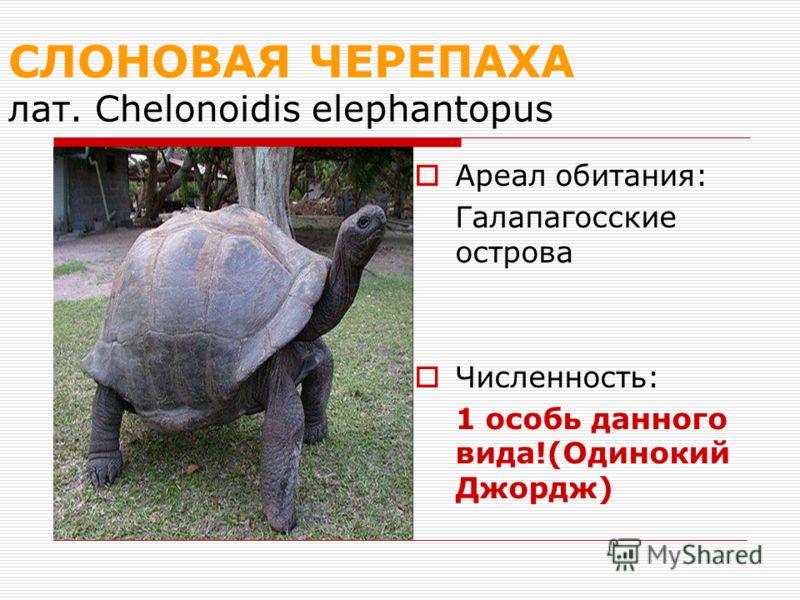 СЛОНОВАЯ ЧЕРЕПАХА лат. Chelonoidis elephantopus Ареал обитания: Галапагосские острова Численность: 1 особь данного вида!(Одинокий Джордж)