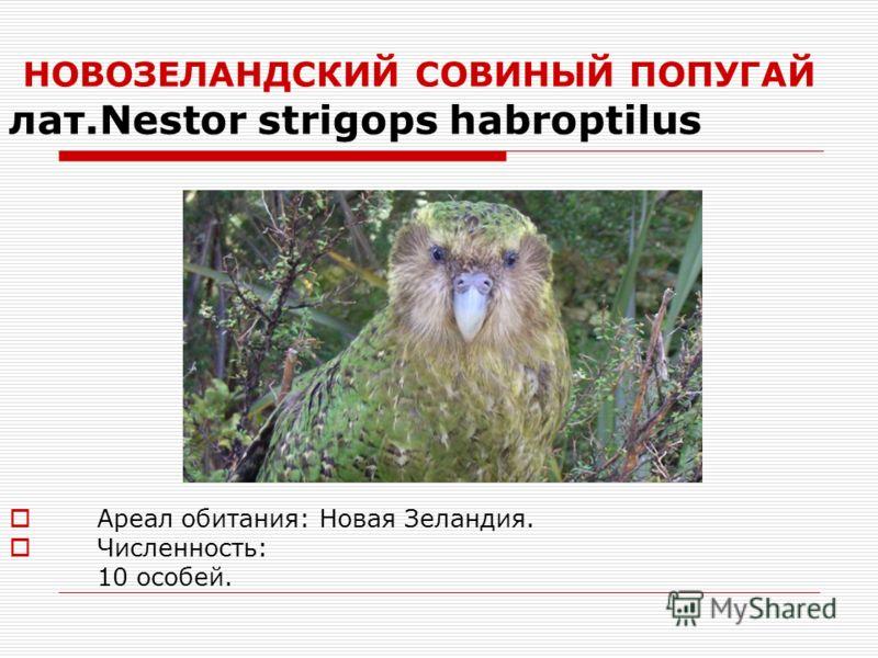 НОВОЗЕЛАНДСКИЙ СОВИНЫЙ ПОПУГАЙ лат.Nestor strigops habroptilus Ареал обитания: Новая Зеландия. Численность: 10 особей.