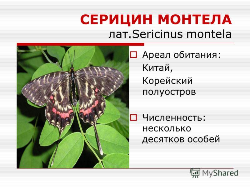 СЕРИЦИН МОНТЕЛА лат.Sericinus montela Ареал обитания: Китай, Корейский полуостров Численность: несколько десятков особей