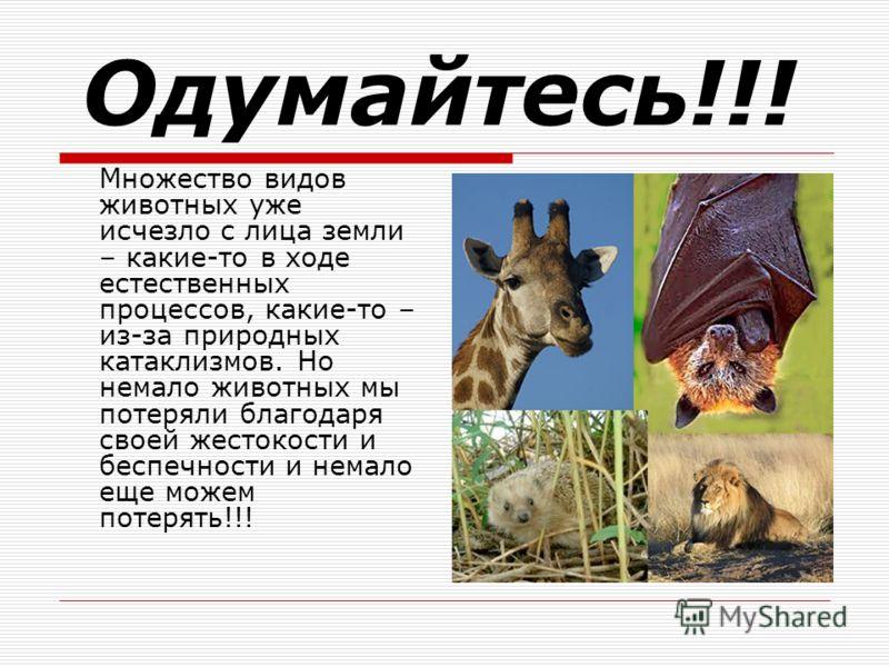Одумайтесь!!! Множество видов животных уже исчезло с лица земли – какие-то в ходе естественных процессов, какие-то – из-за природных катаклизмов. Но немало животных мы потеряли благодаря своей жестокости и беспечности и немало еще можем потерять!!!
