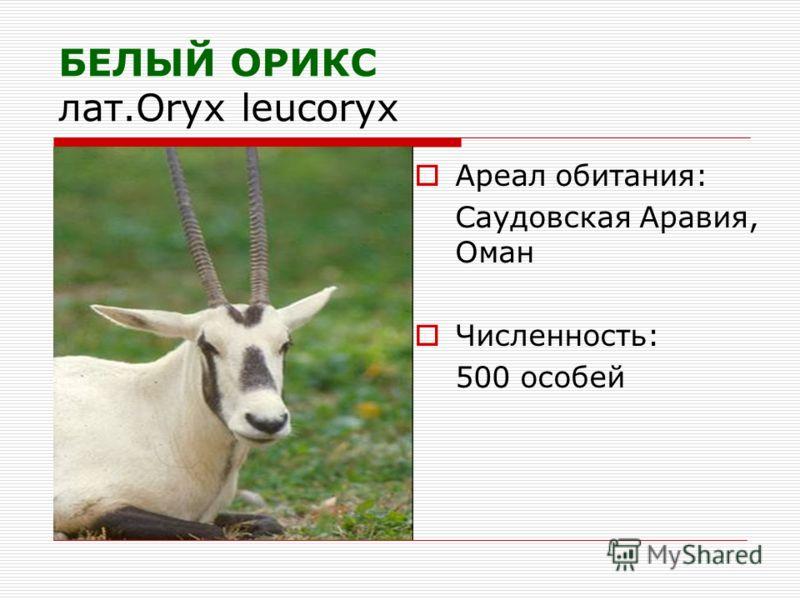 БЕЛЫЙ ОРИКС лат.Oryx leucoryx Ареал обитания: Саудовская Аравия, Оман Численность: 500 особей