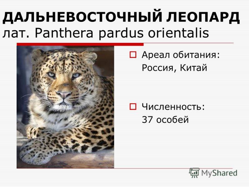 ДАЛЬНЕВОСТОЧНЫЙ ЛЕОПАРД лат. Panthera pardus orientalis Ареал обитания: Россия, Китай Численность: 37 особей