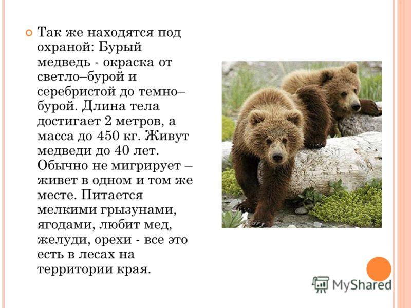 Так же находятся под охраной: Бурый медведь - окраска от светло–бурой и серебристой до темно– бурой. Длина тела достигает 2 метров, а масса до 450 кг. Живут медведи до 40 лет. Обычно не мигрирует – живет в одном и том же месте. Питается мелкими грызу