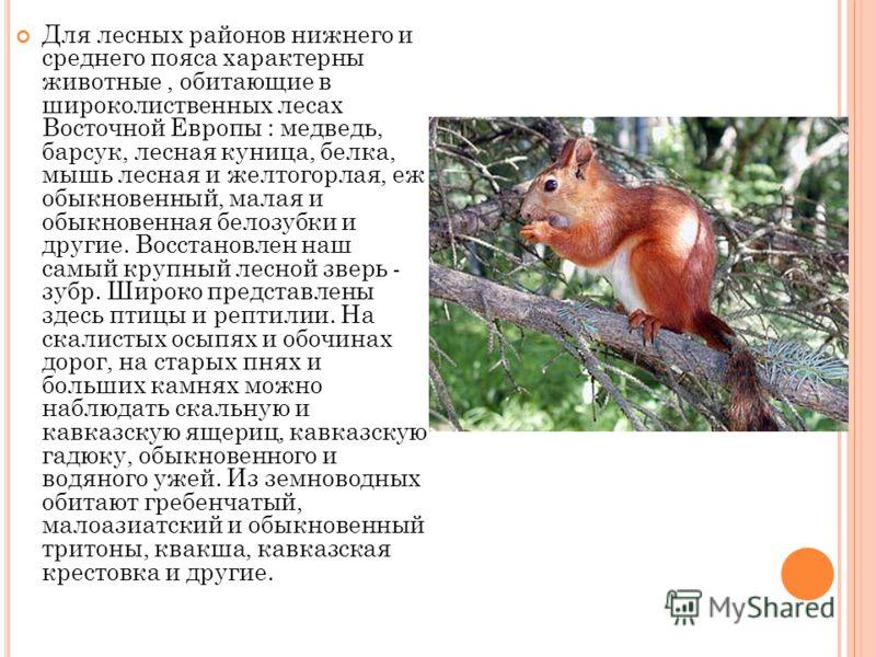 Для лесных районов нижнего и среднего пояса характерны животные, обитающие в широколиственных лесах Восточной Европы : медведь, барсук, лесная куница, белка, мышь лесная и желтогорлая, еж обыкновенный, малая и обыкновенная белозубки и другие. Восстан