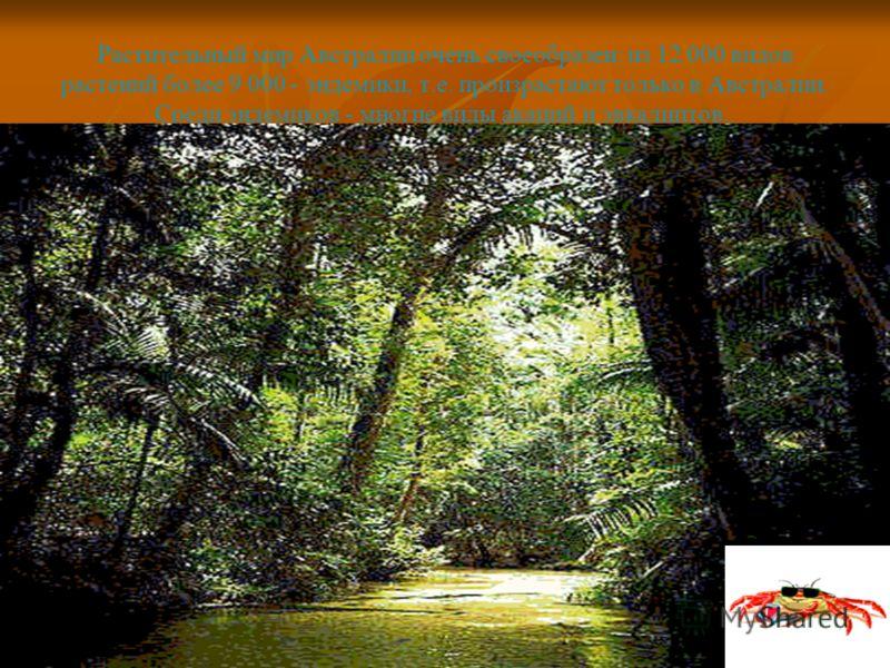 Растительный мир Австралии очень своеобразен: из 12 000 видов растений более 9 000 - эндемики, т.е. произрастают только в Австралии. Среди эндемиков - многие виды акаций и эвкалиптов..
