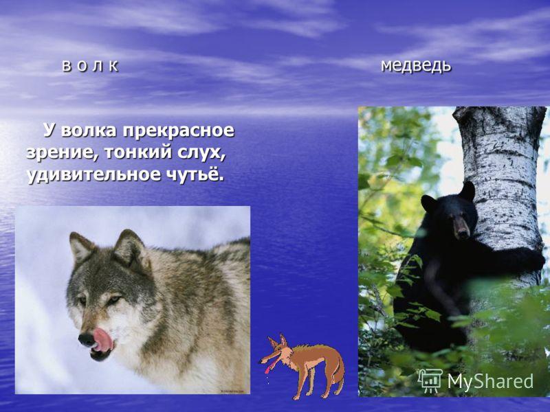 в о л к медведь в о л к медведь У волка прекрасное зрение, тонкий слух, удивительное чутьё. У волка прекрасное зрение, тонкий слух, удивительное чутьё.