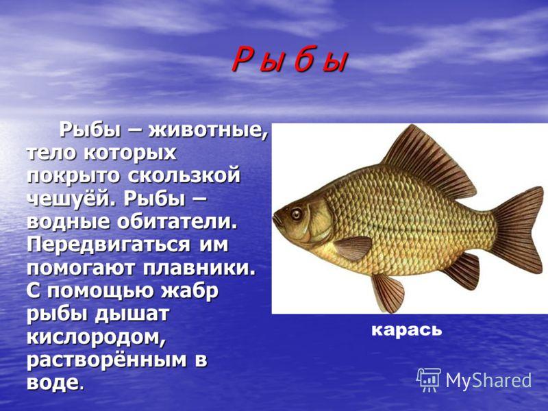 Р ы б ы Р ы б ы Рыбы – животные, тело которых покрыто скользкой чешуёй. Рыбы – водные обитатели. Передвигаться им помогают плавники. С помощью жабр рыбы дышат кислородом, растворённым в воде. Рыбы – животные, тело которых покрыто скользкой чешуёй. Ры