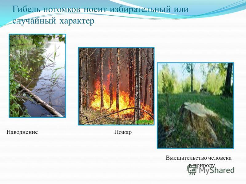 Гибель потомков носит избирательный или случайный характер НаводнениеПожар Вмешательство человека в природу