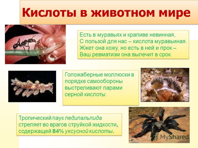 Кислоты в животном мире Тропический паук педипальпида стреляет во врагов струйкой жидкости, содержащей 84% уксусной кислоты. Тропический паук педипальпида стреляет во врагов струйкой жидкости, содержащей 84% уксусной кислоты. Голожаберные моллюски в