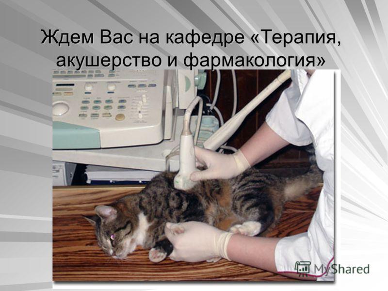 Ждем Вас на кафедре «Терапия, акушерство и фармакология»
