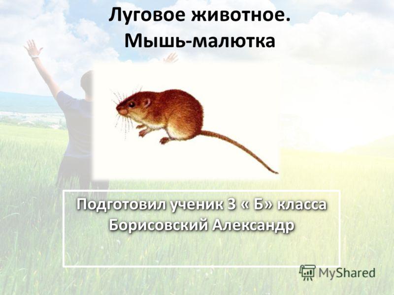 Луговое животное. Мышь-малютка Подготовил ученик 3 « Б» класса Борисовский Александр