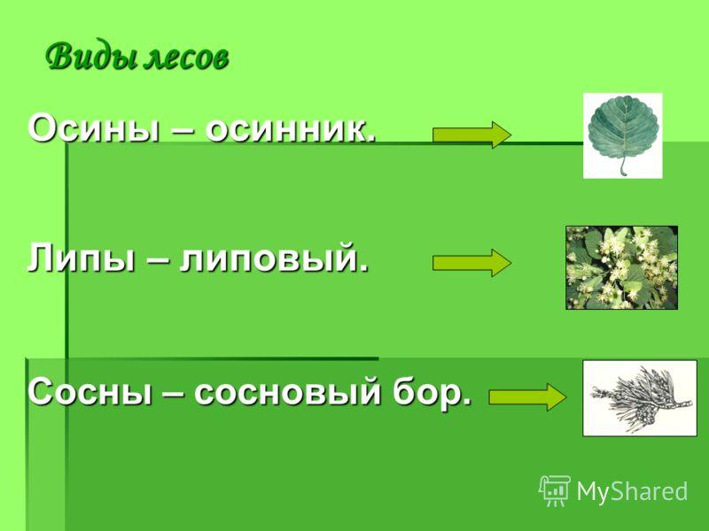 Осины – осинник. Липы – липовый. Сосны – сосновый бор.