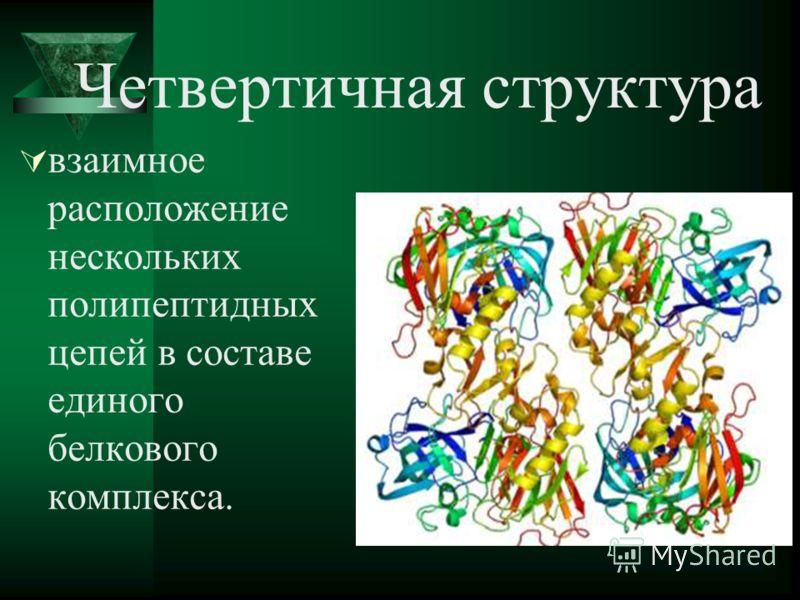 Четвертичная структура взаимное расположение нескольких полипептидных цепей в составе единого белкового комплекса.