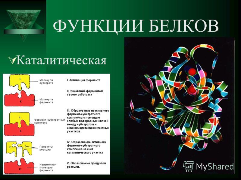 ФУНКЦИИ БЕЛКОВ Каталитическая