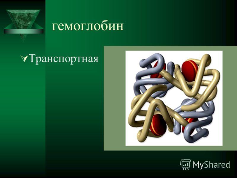 гемоглобин Транспортная