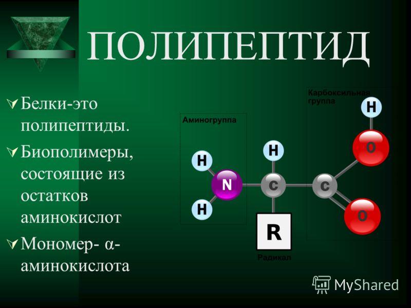 ПОЛИПЕПТИД Белки-это полипептиды. Биополимеры, состоящие из остатков аминокислот Мономер- α- аминокислота