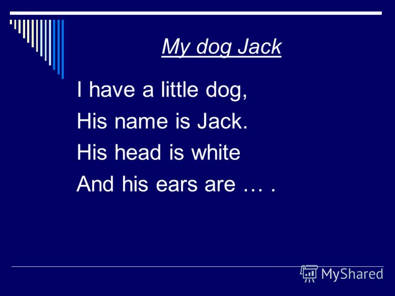 My dog Jack I have a little dog, His name is Jack. His head is white And his ears are ….