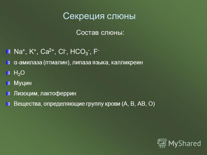 Состав слюны: Na +, K +, Ca 2+, Cl -, HCO 3 -, F - α-амилаза (птиалин), липаза языка, калликреин Н 2 О Муцин Лизоцим, лактоферрин Вещества, определяющие группу крови (А, В, АВ, О) Секреция слюны
