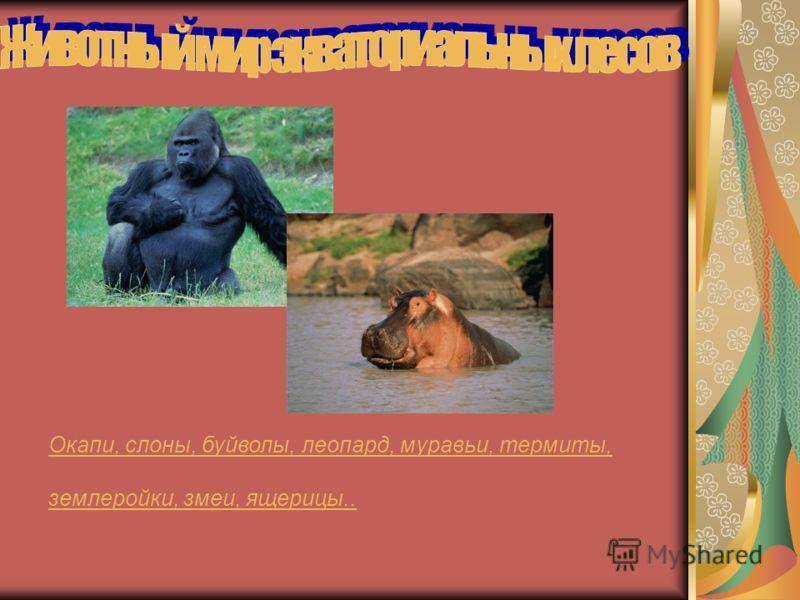 Влажные э ээ экваториальные л лл леса По обе стороны от экватора, в бассейне реки Конго и вдоль Гвинейского залива к северу от экватора. Почвы экваториальных лесов формируются в условиях влажного и жаркого климата, они богаты железом, имеют красноват