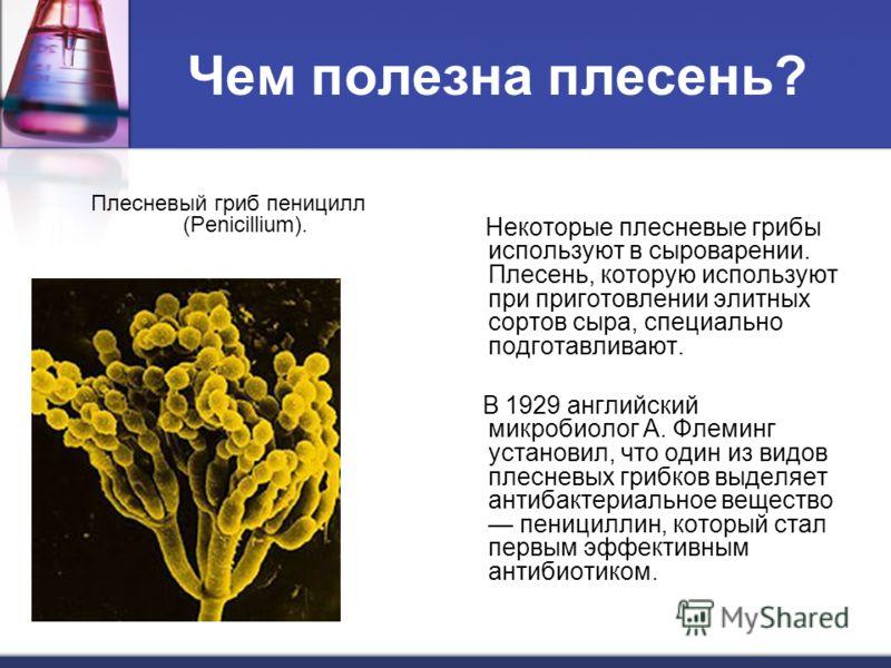 Чем полезна плесень? Плесневый гриб пеницилл (Penicillium). Некоторые плесневые грибы используют в сыроварении. Плесень, которую используют при приготовлении элитных сортов сыра, специально подготавливают. В 1929 английский микробиолог А. Флеминг уст