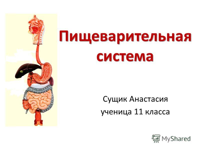 Пищеварительная система Сущик Анастасия ученица 11 класса