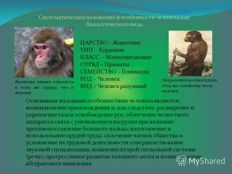 Систематическое положение и особенности человека как биологического вида. ЦАРСТВО - Животные ТИП – Хордовые КЛАСС - Млекопитающие ОТРЯД - Приматы СЕМЕЙСТВО – Гоминиды РОД – Человек ВИД - Человек разумный Основными видовыми особенностями человека явля
