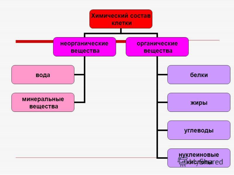 Химический состав клетки неорганические вещества вода минеральные вещества органические вещества белки жиры углеводы нуклеиновые кислоты