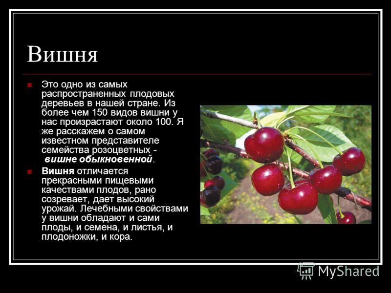 Вишня Это одно из самых распространенных плодовых деревьев в нашей стране. Из более чем 150 видов вишни у нас произрастают около 100. Я же расскажем о самом известном представителе семейства розоцветных - вишне обыкновенной. Вишня отличается прекрасн