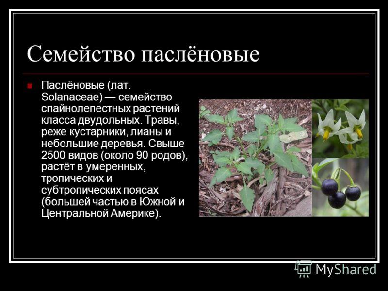 Семейство паслёновые Паслёновые (лат. Solanaceae) семейство спайнолепестных растений класса двудольных. Травы, реже кустарники, лианы и небольшие деревья. Свыше 2500 видов (около 90 родов), растёт в умеренных, тропических и субтропических поясах (бол