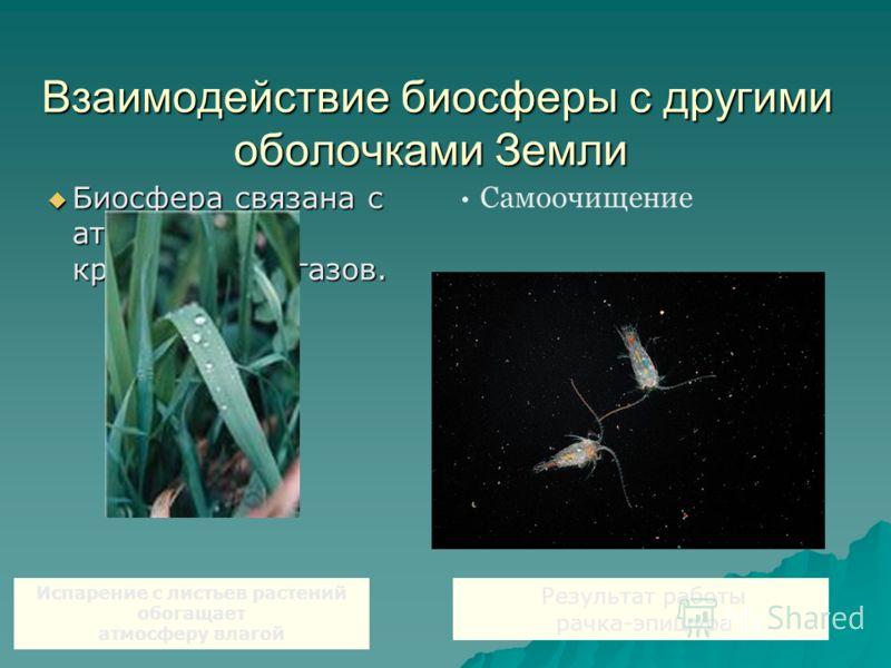 Взаимодействие биосферы с другими оболочками Земли Взаимодействие биосферы с другими оболочками Земли Биосфера связана с атмосферой круговоротом газов. Биосфера связана с атмосферой круговоротом газов. Испарение с листьев растений обогащает атмосферу
