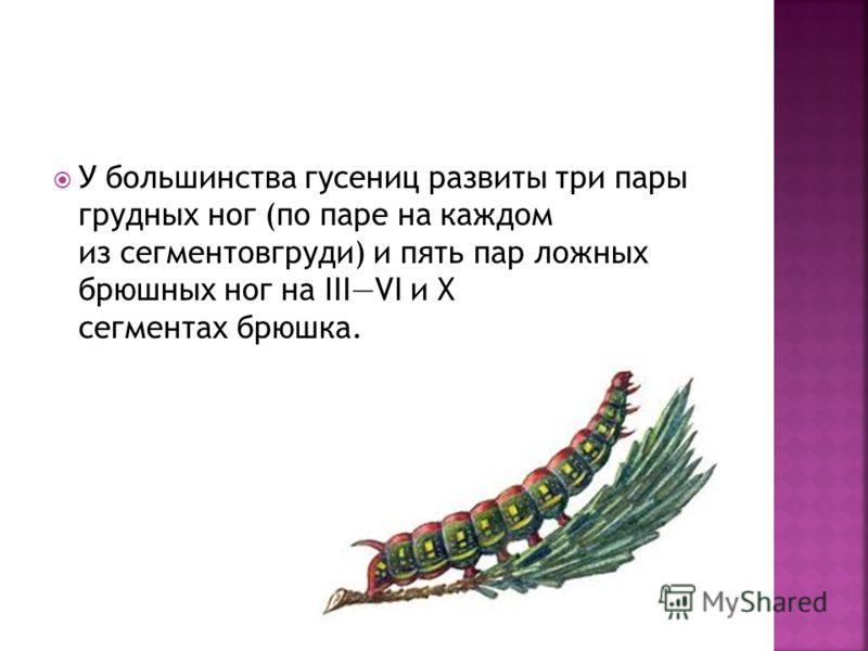У большинства гусениц развиты три пары грудных ног (по паре на каждом из сегментовгруди) и пять пар ложных брюшных ног на IIIVI и X сегментах брюшка.