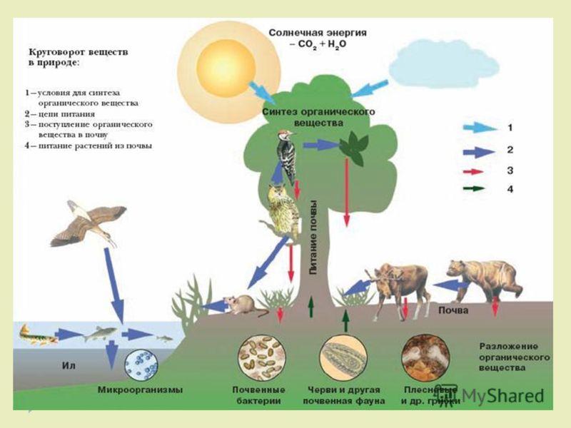 При разложении бактериями и грибами отмерших растений и животных образуется дополнительное количество углекислого газа, а органические вещества превращаются в минеральные, которые попадают в почву и снова усваиваются растениями.