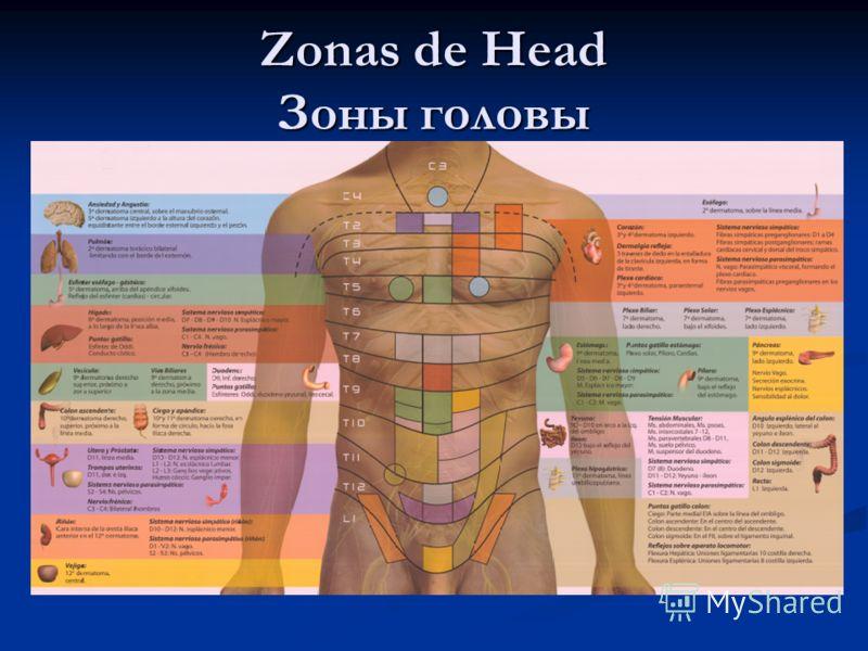 Zonas de Head Зоны головы