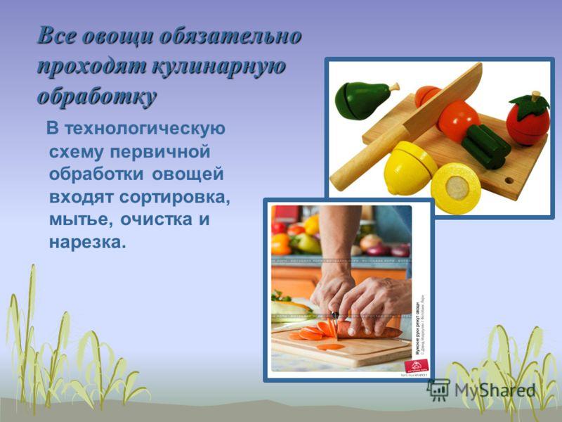 Все овощи обязательно проходят кулинарную обработку В технологическую схему первичной обработки овощей входят сортировка, мытье, очистка и нарезка.