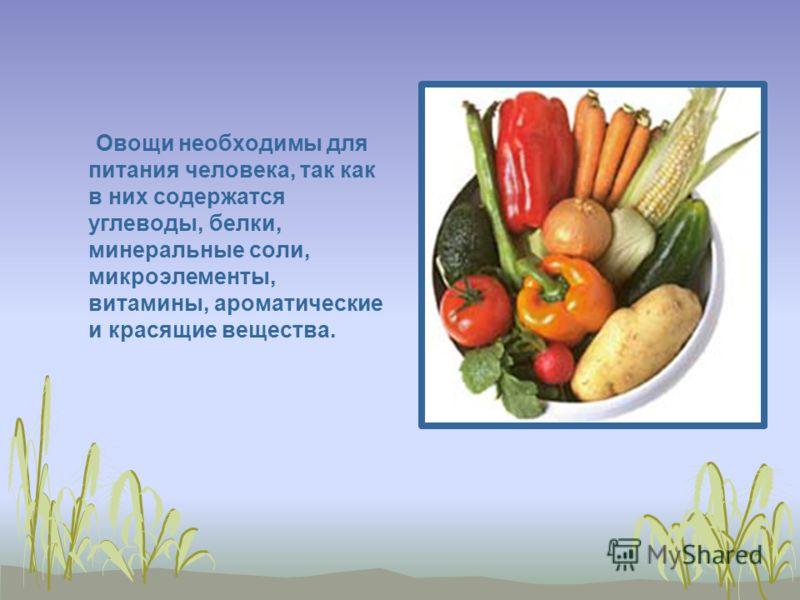 Овощи необходимы для питания человека, так как в них содержатся углеводы, белки, минеральные соли, микроэлементы, витамины, ароматические и красящие вещества.