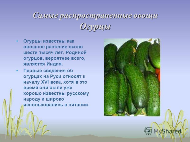 Самые распространенные овощи Огурцы Огурцы известны как овощное растение около шести тысяч лет. Родиной огурцов, вероятнее всего, является Индия. Первые сведения об огурцах на Руси относят к началу XVI века, хотя в это время они были уже хорошо извес