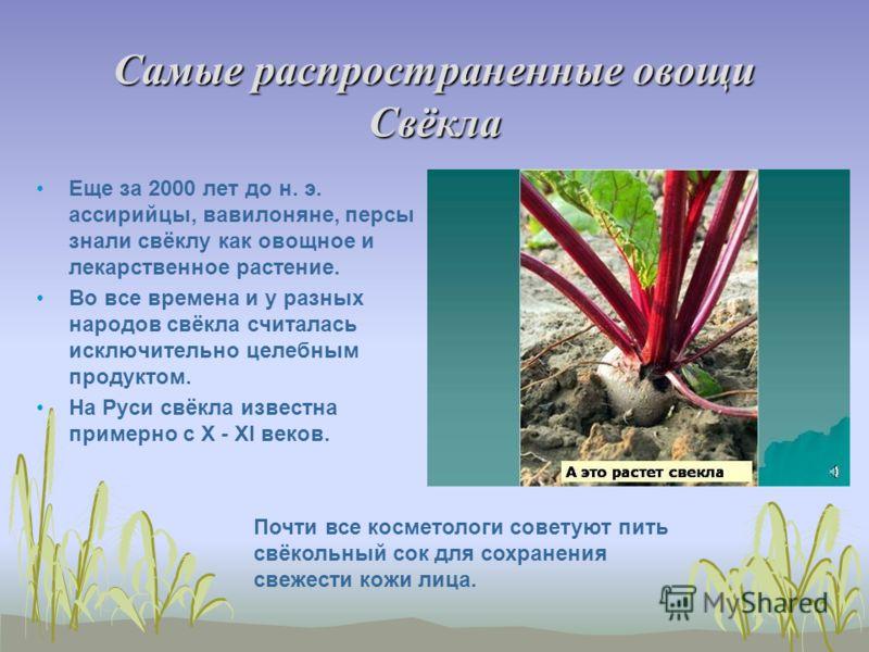 Самые распространенные овощи Свёкла Еще за 2000 лет до н. э. ассирийцы, вавилоняне, персы знали свёклу как овощное и лекарственное растение. Во все времена и у разных народов свёкла считалась исключительно целебным продуктом. На Руси свёкла известна