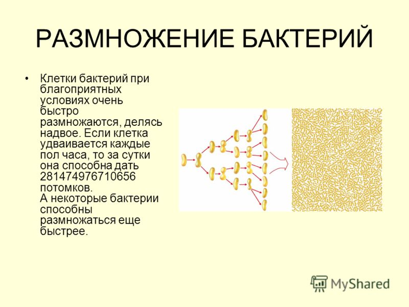 "Презентация на тему: ""ЦАРСТВО"