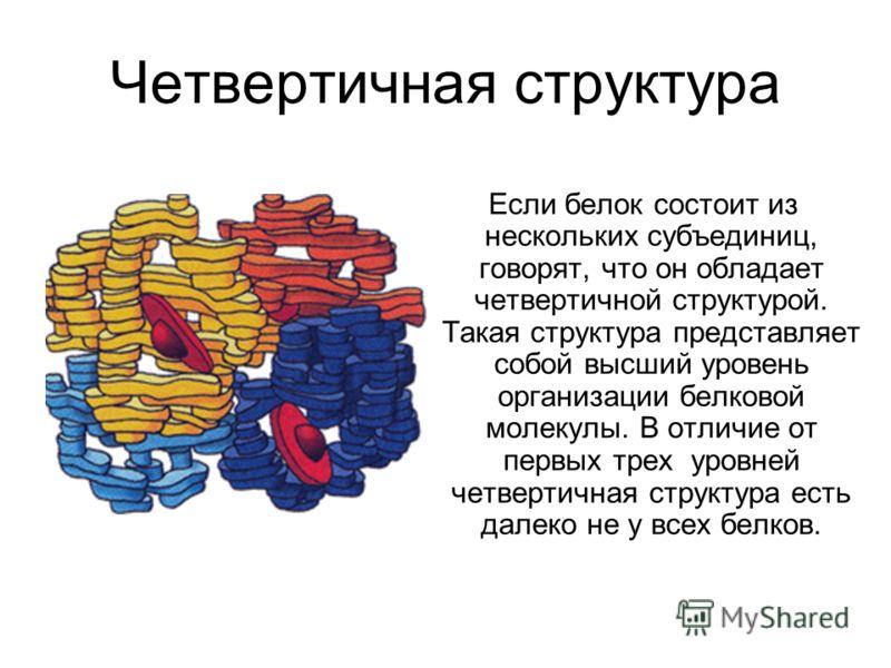 Четвертичная структура Если белок состоит из нескольких субъединиц, говорят, что он обладает четвертичной структурой. Такая структура представляет собой высший уровень организации белковой молекулы. В отличие от первых трех уровней четвертичная струк