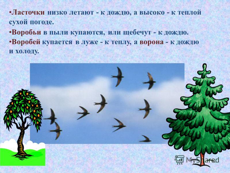 Ласточки низко летают - к дождю, а высоко - к теплой сухой погоде. Воробьи в пыли купаются, или щебечут - к дождю. Воробей купается в луже - к теплу, а ворона - к дождю и холоду.