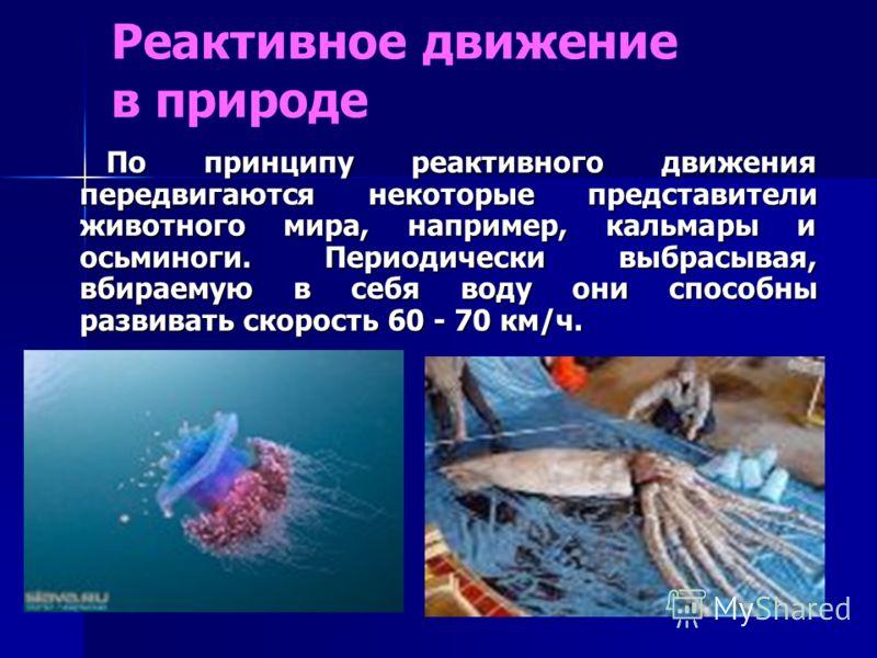 Реактивное движение в природе По принципу реактивного движения передвигаются некоторые представители животного мира, например, кальмары и осьминоги. Периодически выбрасывая, вбираемую в себя воду они способны развивать скорость 60 - 70 км/ч. По принц