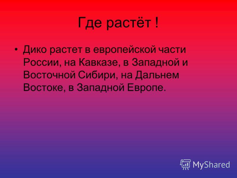 Где растёт ! Дико растет в европейской части России, на Кавказе, в Западной и Восточной Сибири, на Дальнем Востоке, в Западной Европе.