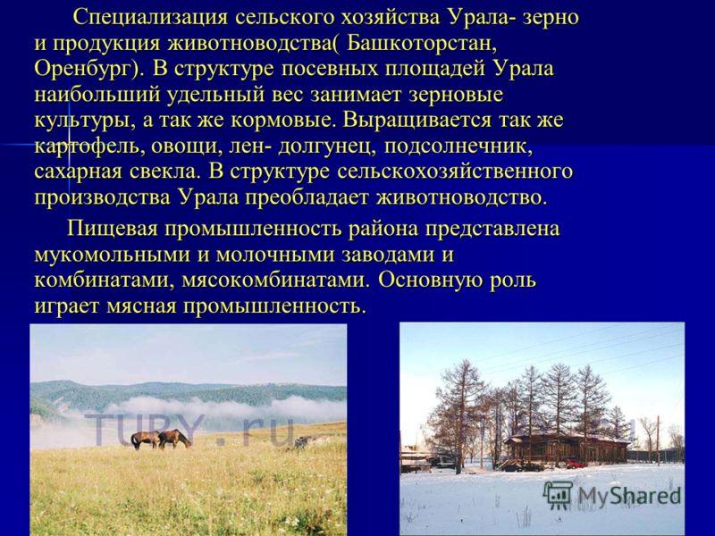Специализация сельского хозяйства Урала- зерно и продукция животноводства( Башкоторстан, Оренбург). В структуре посевных площадей Урала наибольший удельный вес занимает зерновые культуры, а так же кормовые. Выращивается так же картофель, овощи, лен-