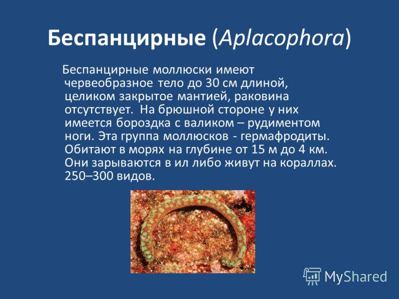 Беспанцирные (Aplacophora) Беспанцирные моллюски имеют червеобразное тело до 30 см длиной, целиком закрытое мантией, раковина отсутствует. На брюшной стороне у них имеется бороздка с валиком – рудиментом ноги. Эта группа моллюсков - гермафродиты. Оби