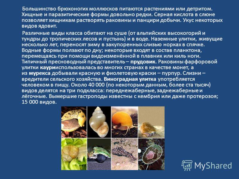 Большинство брюхоногих моллюсков питаются растениями или детритом. Хищные и паразитические формы довольно редки. Серная кислота в слюне позволяет хищникам растворять раковины и панцири добычи. Укус некоторых видов ядовит. Различные виды класса обитаю